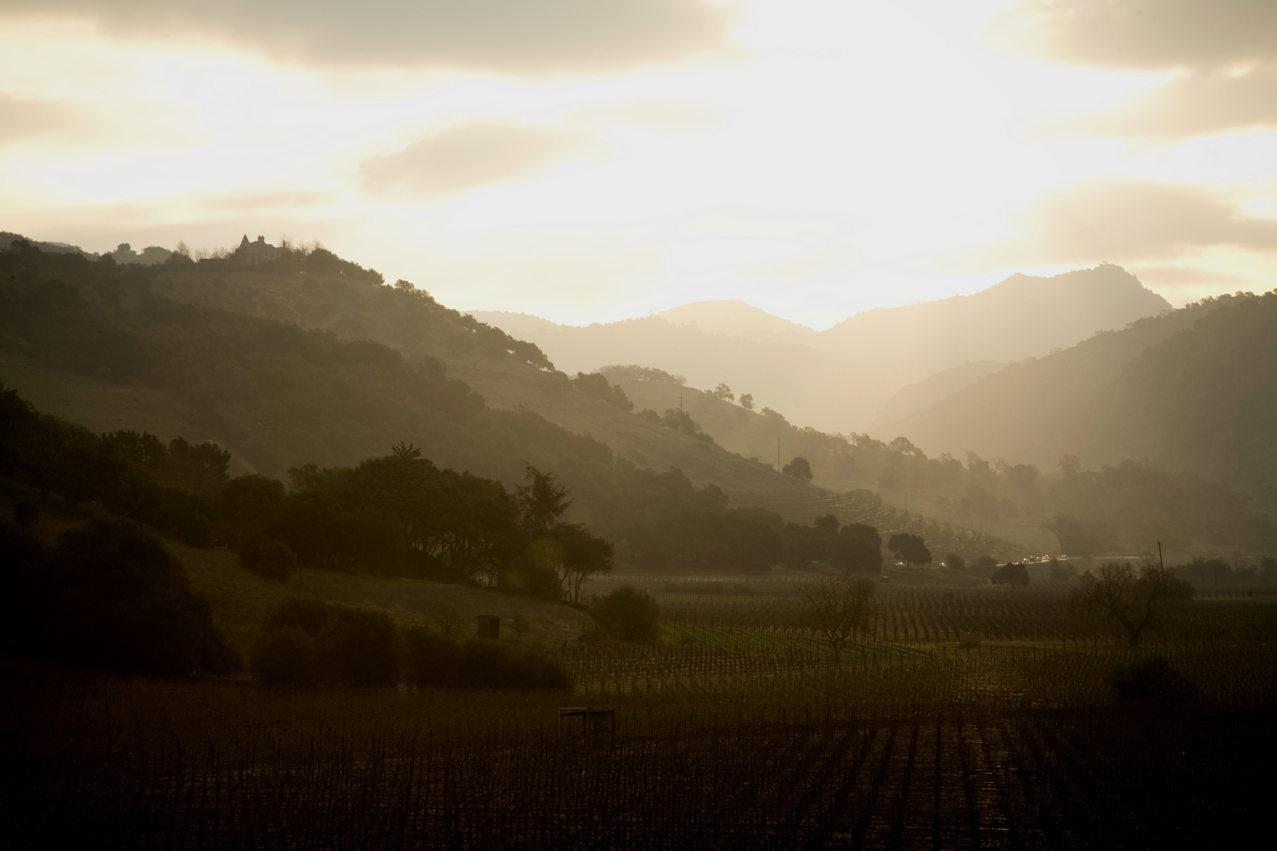 A view of the Rutherford AVA within the Napa Valley AVA.